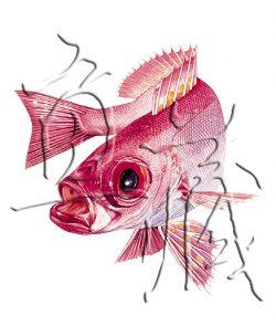 魚藏生態畫作授權